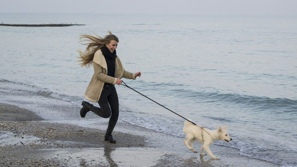 Mit dem Hund an den Strand - in Holland kein Problem