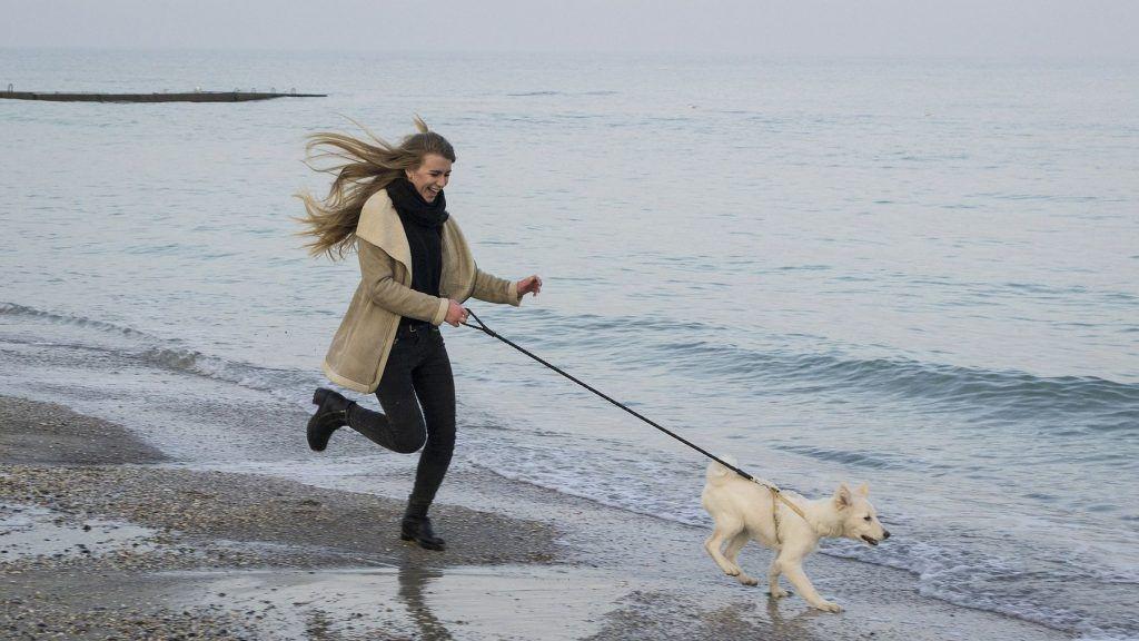 Mit dem Hund an den Strand - in Holland kein Problem
