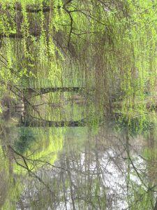 Weiden-Aue im Tiergarten Berlin