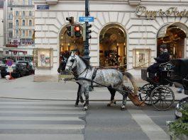Auch so kann Einkaufen sein: Fiaker vor der Kärtnerstr. in Wien